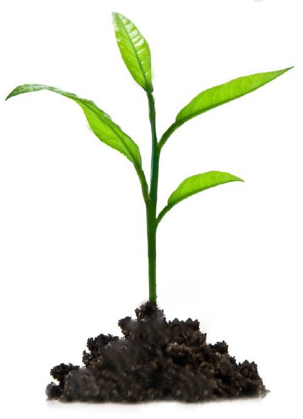 Tree-Small